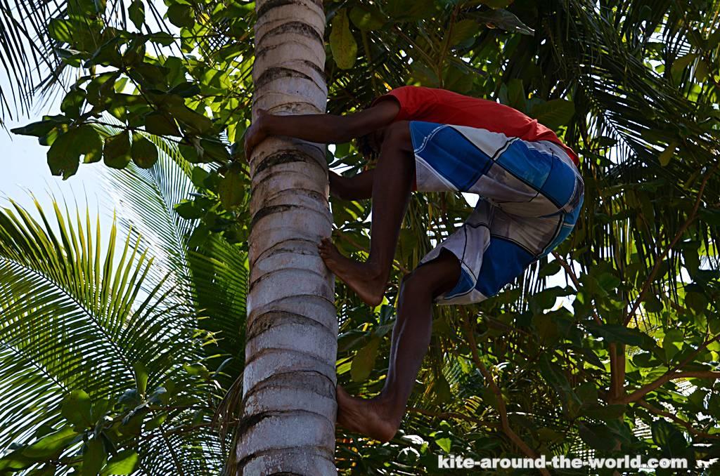 Palmenkletterjunge
