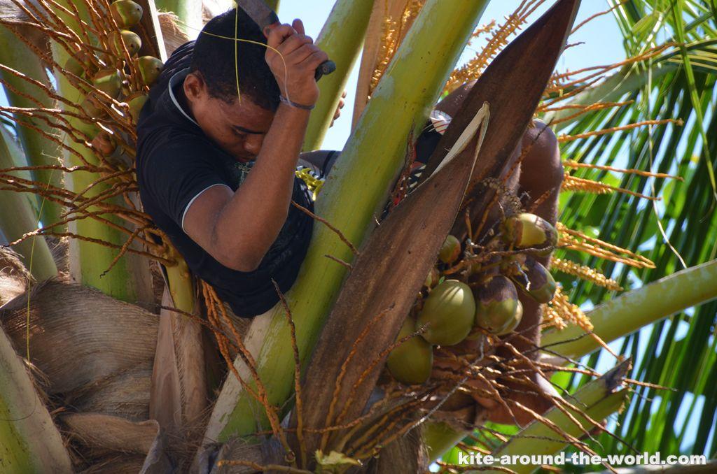 Palmenklettermachetenjunge