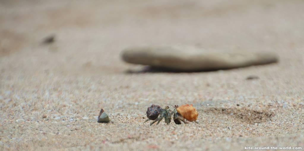 14.8 zwei Krabben am Strand