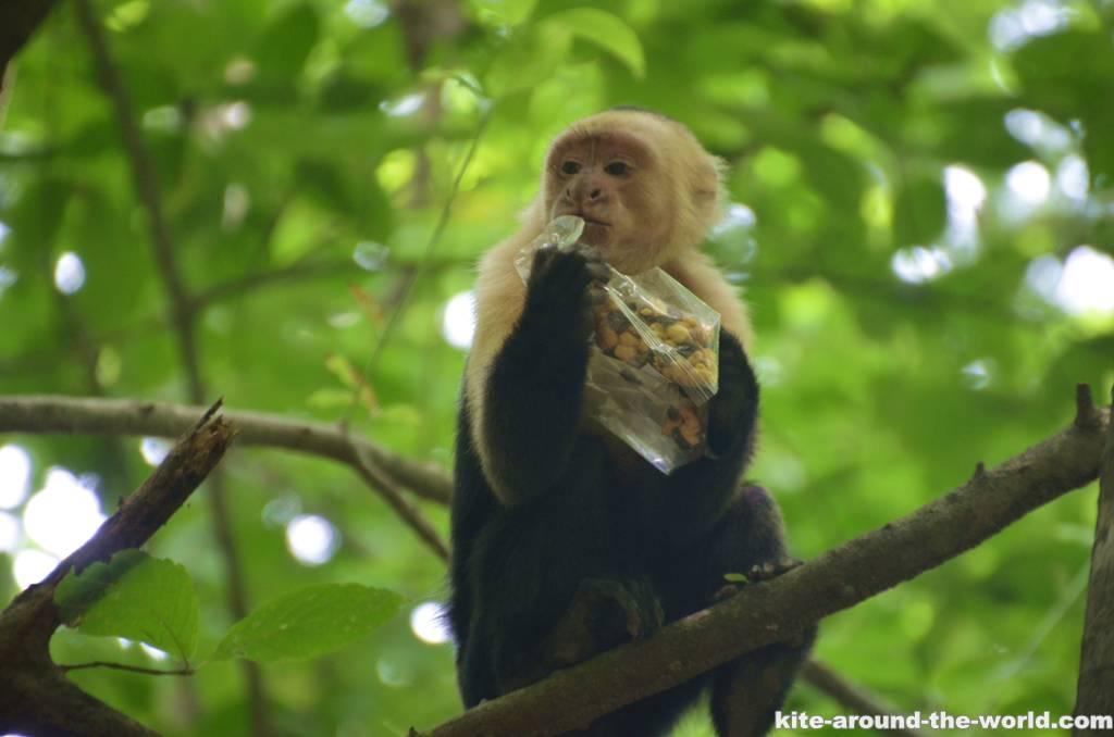 Affe Nüsse