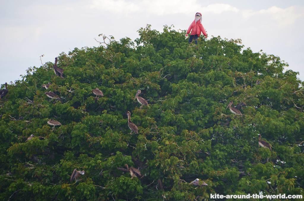 Punta Arenas Pelikane im Weihnachtsbaum