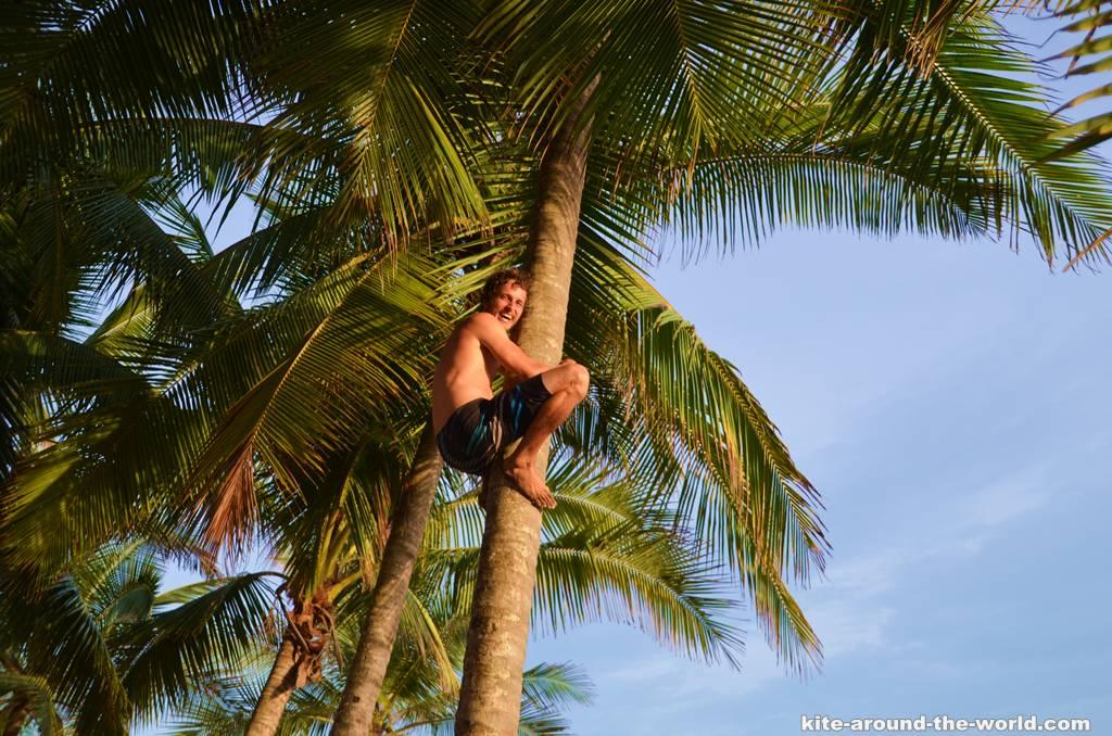 Daniel auf der Palme