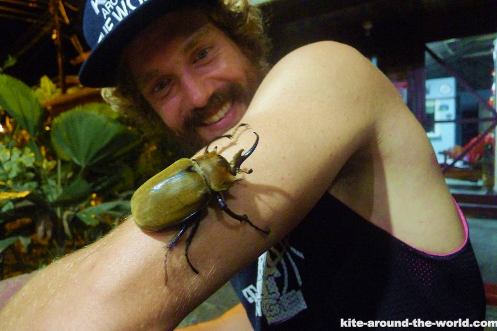Fetter Käfer
