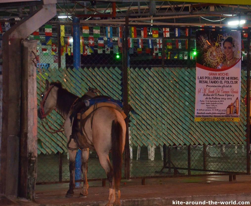 Pferd vor Bar in Sona